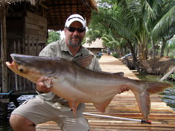 Giant Mekong Catfish - Bungsamran Lake
