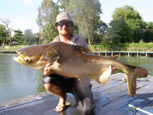 Mekong giant catfish fishing in Bangkok