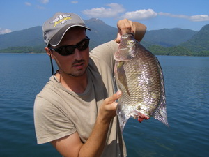 Tilapia - victim of a savage snakehead attack