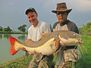 Amazonian Redtail catfish fishing in Thailand