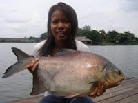 Pacu Fishing Thailand