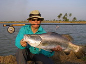 barramundi fishing thailand
