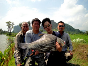 Siamese Giant Carp fsihing in Thailand