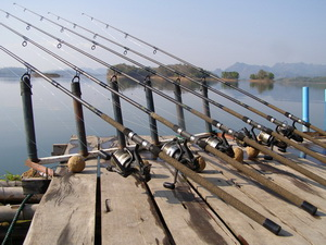 6 rod setup for rohu carp fishing in Thailand