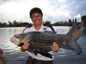 Siamese Carp fishing in Bangkok