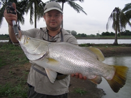 barramundi fly fishing thailand