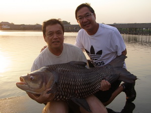carp fishing bangkok