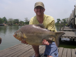 Pacu fishing in Thailand