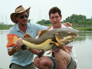 Redtail catfish fishing in Thailand