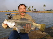 fly fishing for barramundi