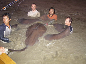 wrestling a 550lb stingray in Thailand