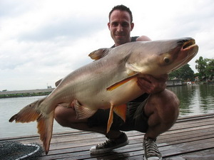 mekong giant catfish fishing in thailand