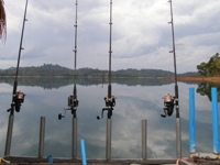 Fishing in Thailand 's Khao Laem Dam for Indian Carp\Rohu and Black carp\Black shark fish