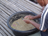 Mixing groundbait 'ram' for carp fishing in Thailand