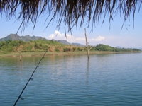 Indian carp fishing in thailand at khao laem dam