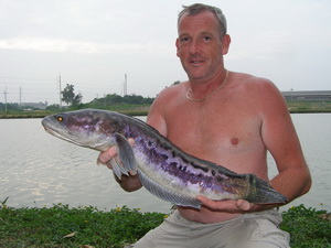Snakehead Fishing in Thailand