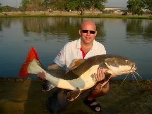 redtail catfish from IT Lake Monsters Thailand