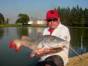 Asian Redtail Catfish native to Thailand