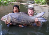 Siamese giant carp fishing in Thailand
