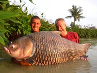 Worlds biggest carp thailand