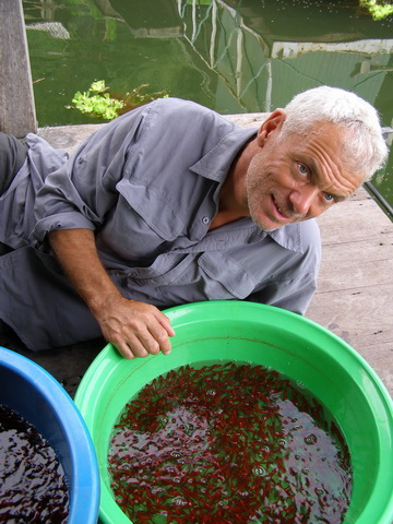 Jeremy Wade shows snakehead fry in captivity before going in search of a wild 'fry ball.'