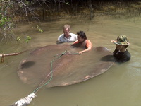 Robson Green freshwater stingray fishing Thailand for Extreme Fishing guided by Fish Thailand
